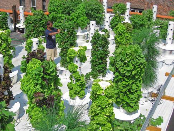 The World Of Rooftop Gardening